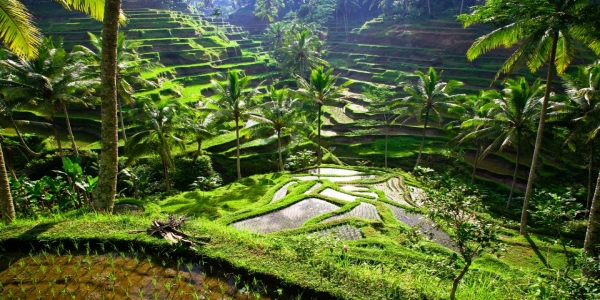 Bali With UBUD Tour Package